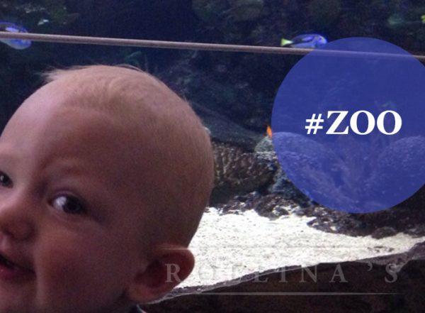 burgers_zoo4