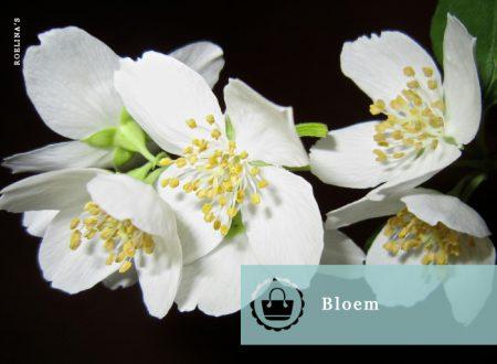 bloemennaam